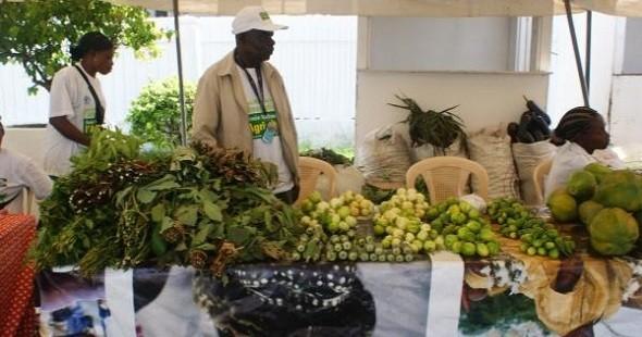 L 39 irdc africa veut investir le milieu rural au gabon for En milieu rural